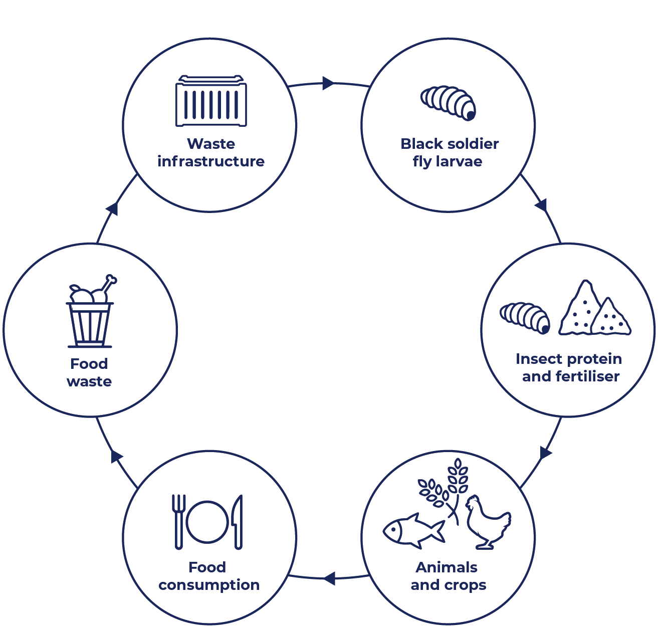 Circle diagram with icons, starts at food consumption, leads to food waste, waste infrastructure, black soldier fly larvae, insect protein and fertiliser, animals and cops, and back to food consumption.