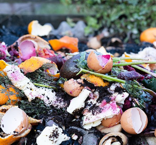 Goterra processes household food and kitchen waste. Photo of mixed food waste.
