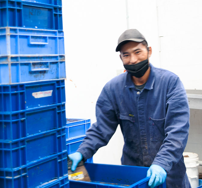 Insect farmer at work experimenting with new ways to get insects to do jobs.